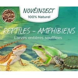 Ganze gepuffte Reptilienlarven - Amphibien 50 Gramm Glas Noveland Food ENT-50-LEZ