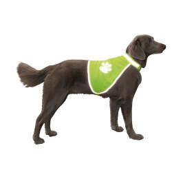Nobby Gilet de sécurité taille S. 50 cm pour chien VA-78314 Sécurité chien