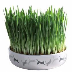 Trixie TR-42341 Ecuelle céramique avec herbe à chat Catnip