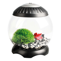 Aquarium Nano sphère 5 L 22,5 x 22,5 x 24 cm Aquariums Flamingo FL-403590