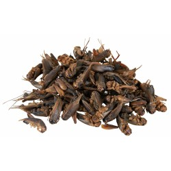 Trixie Dried crickets 25 gr, for reptiles. Food and drink