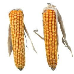 Mazorca de maíz total 250 gr, dos mazorcas de maíz Trixie TR-60288 Food