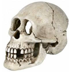 Crâne 15 cm décoration aquarium Décoration et autre  Trixie TR-8713