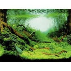 Fond décor pour aquarium 80 x 40 cm Décoration et autre  Trixie TR-8126