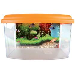 zolux Aqua travel box II, Small, size 22 x 16 x H 14 cm. for fish. random color. Accessory