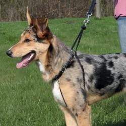 Harnais de dressage pour chien, taille XL 55 - 80 cm harnais chien Trixie TR-1304