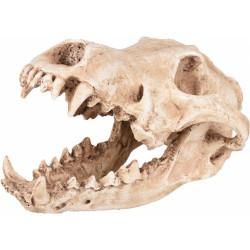Crâne prédateur animaux, taille 24 par 13 et 13 cm, Décoration aquarium Décoration et autre  Flamingo FL-410220