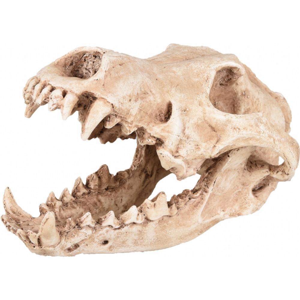 Flamingo FL-410220 Crâne prédateur animaux, taille 24 par 13 et 13 cm, Décoration aquarium Decoration and other