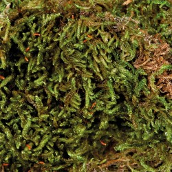 Trixie Mousse pour terrarium 200 g TR-76155 Décoration et autre