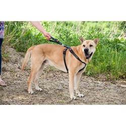 Harnais de sécurité pour voiture - Taille S / 35-50 cm pour chien Transport Flamingo FL-1032109