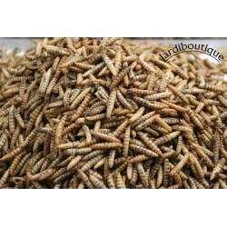 Larves entières soufflées reptiles - amphibiens pot de 50 grammes Nourriture novealand ENT-50-LEZ
