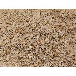 Vadigran BIRD Seeds Salatsamen 3Kg VA-321050 Essen und Trinken