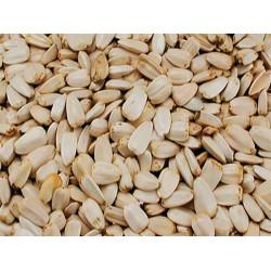 Vadigran Vogelsamen, große weiße Sonnenblumenkerne, 0,5 Kg VA-215010 Essen und Trinken