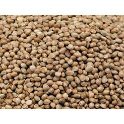 Vadigran Samen für Vogelhanf Hanf 3,5Kg VA-210050 Essen und Trinken