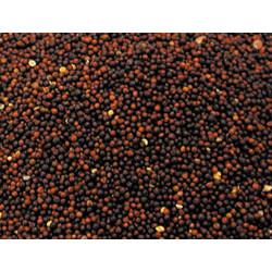 Vadigran Graines pour OISEAUX navette 1Kg VA-207010 Nourriture
