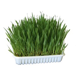 kerbl KE-83199 Gnawing grass FOR ROUTERS Friandise