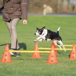 TR-32091 Trixie la agilidad de los perros es un obstáculo.. Perro de agilidad